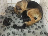 foto van Daphney en pups